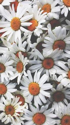 Обои wallpaper iPhone flowers