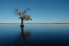 Lake Louisa, Clermont, Florida
