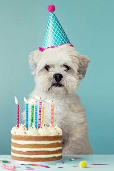 Dog Mom Discover Top Activities For Dog Birthday Parties - Wag! Activities For Dog Birthday Parties Dog First Birthday, Puppy Birthday, Animal Birthday, Birthday Cake, Dog Birthday Parties, Birthday Ideas, Birthday Outfits, Birthday Invitations, Dog Parties