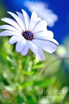 Interesting daisy.