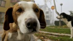 Ontario is the only province that has outlawed no-pet rules at rental properties.