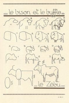 How to draw bison, buffalo and bullocks? or oxen? (les animaux 88 | Flickr: partage de photos!)