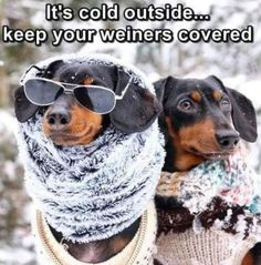 Keep your weiners and dogs warm - cold weather meme Crusoe The Celebrity Dachshund, Dresser, Cute Little Puppies, Fashion Line, Dog Pictures, I Love Dogs, Round Sunglasses, Legs, Celebrities