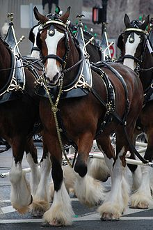 "The Budweiser Clydesdales ~ fond memories of them RUNNING right past me up the ""elephant ramp"" at the old Capital Centre one year at the International Horse Show ~ and the commercials ... so beautiful and SO big!!"