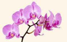 büyük çiçekler ile ilgili görsel sonucu