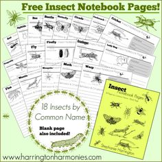 Free Insect Notebook Pages | Harrington Harmonies