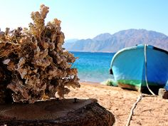 Relaxing by the Blue Lagoon in Dahab, Egypt