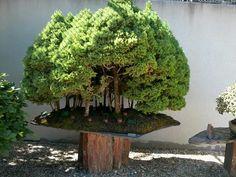 Awesome #Saikei #bonsai #landscape http://www.roanokemyhomesweethome.com