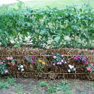 Straw Bale Gardening, great in all climates from the Arctic to the Caribbean islands!