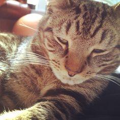 My cat Mr. Jimi