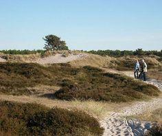Weiter nördlich, etwa in der Inselmitte, beginnt die Dünenheide: ...