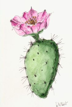 Cactus Prickly Pear Plant Original Watercolor Art Painting Pen and Ink Watercolor Hand Painted Cactus Flower Plant Watercolor Cactus Prickly Pear Plant Original Watercolor Art Painting Pen and Ink Watercolor Hand Painted Cactu Cactus Drawing, Cactus Painting, Plant Painting, Cactus Art, Cactus Plants, Prickly Cactus, Cacti, Watercolor Art Paintings, Watercolor Plants