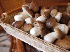 Fotogalerie: Vypěstujte si vkvětináči vlastní hříbky Ale, Stuffed Mushrooms, Vegetables, Food, Baskets, Gardening, Mushroom, Stuff Mushrooms, Beer