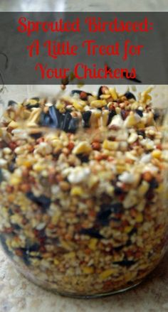 Sprouting bird seed - lifefromthegroundup.us
