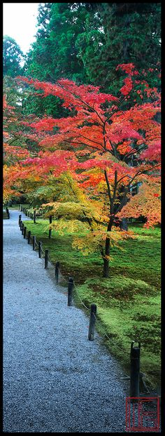 Sanzen-In   No matter how much time we spend walking in the garden, it is impossible to discard the feeling that we are walking in a timeless place.