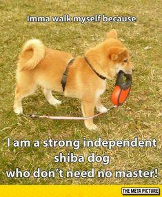 Doge Doesn't Need Human