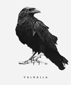 Crows & Raven s. Crow Art, Raven Art, Bird Art, 16 Tattoo, Deer Tattoo, Tattoo Tree, Samoan Tattoo, Polynesian Tattoos, Tattoo Ink