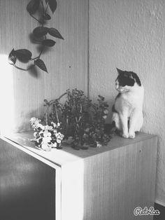 Mačacia kráľovná Miňka