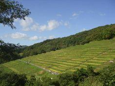 Rice Terraces of Ogura, Sado island