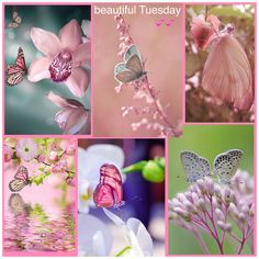 Pink beauty's ✨