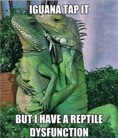 Iguana tap it. But I have reptile dysfunction. So very funny World Funniest Joke, Funniest Short Jokes, Clean Funny Memes, Funny Shit, Funny Stuff, Hilarious, Funny Things, Random Things, Random Stuff