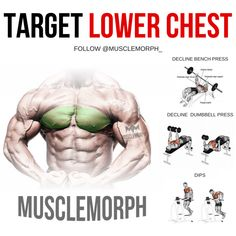 Ectomorph Workout – 3 Workout Secrets to Build Muscle For Skinny Ectomorphs Lower Chest Workout, Chest Workout Women, Chest Workout At Home, Chest Workout Routine, Best Chest Workout, Six Pack Abs Workout, Workout Plan For Women, Lower Chest Exercises, Triceps Workout