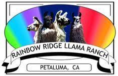 Quality llamas for sale, stud service Llama Arts, Art Logo, Ranch, Rainbow, Llamas, Logos, Image, Guest Ranch, Rain Bow