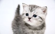 Small cute kitty desktop PC and Mac wallpaper