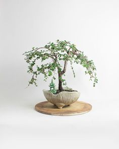 "Chinese Elm bonsai tree ""Summer'16 Elm Collection"" by LiveBonsaiTree by LiveBonsaiTree on Etsy"
