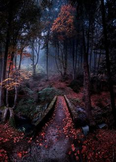 Nice to meet you. Nice to meet you. Magical Forest, Dark Forest, Autumn Forest, Deep Autumn, Fantasy Forest, Forest Path, Autumn Cozy, Tree Forest, Autumn Fall
