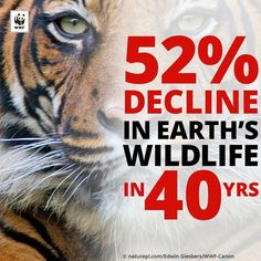 Earth is losing its #wildlife at an alarming rate. Via @wwf_deutschland
