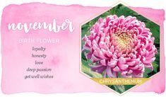 November Birth Flower Name Flower Tattoo, Birth Flower Tattoos, Flower Names, Flower Tattoo Designs, November Birth Flower, Birth Month Flowers, November Zodiac Sign, Birth Month Quotes, Chrysanthemum Flower