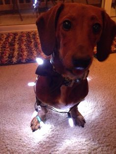 I'll help with the lights