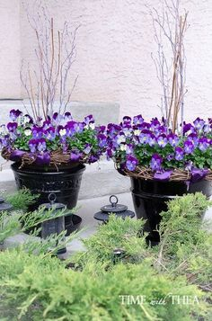 how to create a gorgeous pansy outdoor planter in four easy steps, container gardening, flowers, gardening, how to