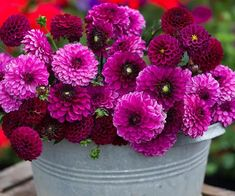 Confused by a vast choice of dahlias? Try these perfectly colour co-ordinated sets Dahlias have gone from being extremely unfashionable to everyone's favourite late-summer star in a very shor…