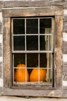 pumpkins through the window