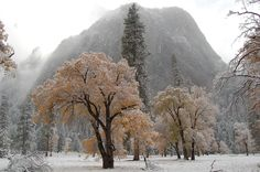 Fall colors and first snowfall in Yosemite (30082000)[OC] #reddit