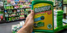 Le caractère cancérogène du glyphosate, le pesticide le plus utilisé au monde, divise profondément les experts fédéraux américains. L'Agence européenne des produits chimiques (ECHA) doit rendre son avis mercredi.