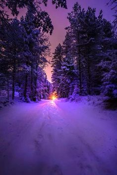 Landscape & Nature - renamonkalou: Into the light Winter Photography, Landscape Photography, Nature Photography, Pretty Pictures, Cool Photos, Beautiful World, Beautiful Places, Winter Wallpaper, Winter Scenery