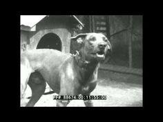 Vídeo caseiro da cidade do Rio de Janeiro na década de 1920.