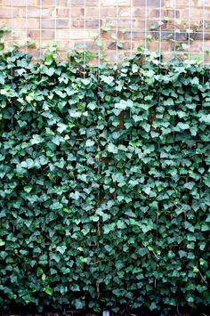 Vetical Gardens A vertical yard can be developed cheaply with yard netting and also a few of your favored climbing plants. Do It Yourself Projects - Develop a Do This Yourself Outdoor Living Wall Vertical Garden Planter #buildingabrickretainingwallgarden