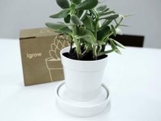 Self-Watering Planters - iGrow by Psychic Factory is a Pot That Absorbs Water on Its Own (GALLERY)