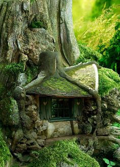 Tree House in the Forrest.fairy house Could you imagine stumbling onto this in the forest? Architecture Organique, Fairy Tree, Tree Tree, Big Tree, Wood Tree, Tree Hut, Unusual Homes, Forest House, Forest Cottage
