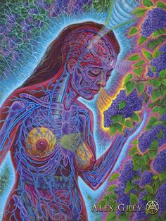 Soaking in the trippy, highly-detailed works of Alex Grey is akin to having your third-eye pried open. Alex Grey, Alex Gray Art, Psy Art, Process Art, Visionary Art, Sacred Art, Psychedelic Art, Trippy, Art Pictures
