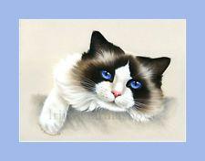 Ragdoll Cat Here I am Print by I Garmashova