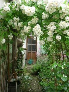 Depósito Santa Mariah: Jardim E Seus Encantos!