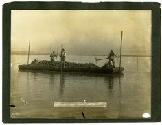 Harvesting oysters on San Francisco Bay