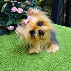 Yorkshire Terrier  Lilu