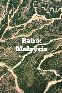 Bairo: Malaysia The biggest long house. Twenty-two families live here. The Elders. Rice fields. Rice harvesting. Trekking in the jungle.