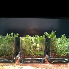herbs growing in the kitchen... http://herbgardens.about.com/od/5bestherbsforcontainers/tp/BestHerbsContainers.htm